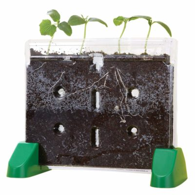 This is an image of a sprout and grow transparent planter for kids.