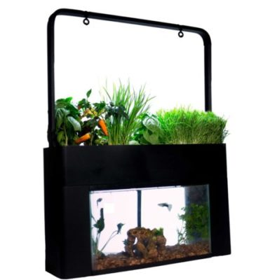 This is an image of a black aquarium and a mini garden on top of it.