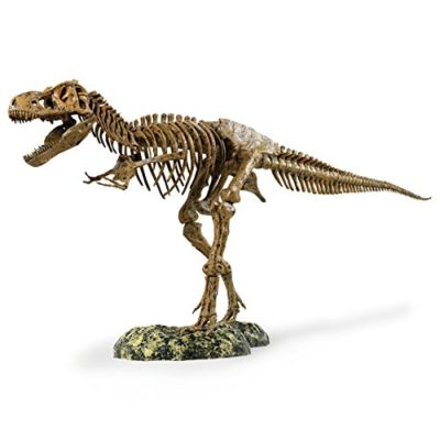 This is an image of a 36 inch t-rex skeleton replica model.