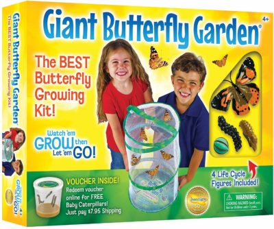 This is an image of a butterfly garden playset by Insect Lore.