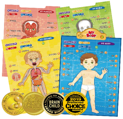This is an image of kid's educational hu;an anatomy cards